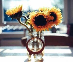 Gibus The Sun Factory | testi sito web | BalenaLab | copywriter